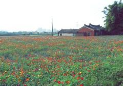 (Yi-Ning Luo) Tags: flowers taiwan