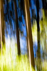 Photo Art: Colors of Spring (memories-in-motion) Tags: trees light color colour art nature forest licht spring natur motionblur bume photoart farben frhling bewegungsunschrfe walf frhlingswald