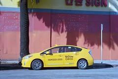 Shadow of a palm (ADMurr) Tags: leica shadow industry film 50mm la kodak cab palm summicron dying m4 taxicab ektar southla