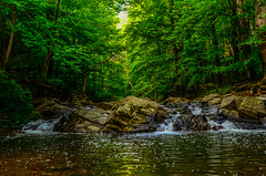 Immersed in nature.... (tomk630) Tags: green nature forest sunrise virginia rocks stream