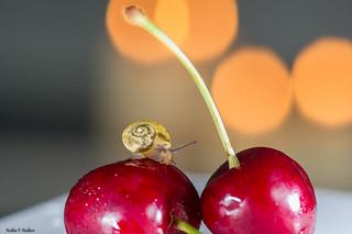 Cherry-snail