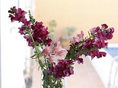 Bienvenidos al verano 1 (Micheo) Tags: flowers flores spain bunch vase welcome bienvenida ramo snapdragons florero conejitos
