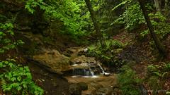 Wagner Falls Area (2016-06-16 ) (bechtelsf) Tags: trees water waterfall woods nikon stream michigan upperpeninsula munising wagnerfalls d810 nikon2470mm28