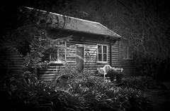Take a seat (Trace Connolly) Tags: allenvalecottages valley australia australian cabin buildings oldbuildings canon7d ferns greatoceanroad house blackandwhite bw environmentalphotography lorne otwayrangesnationalpark otwayranges otway cottages seat bench monochromephotography naturephotography nature nationalpark canon28135mm window contrast woods holiday tree white light park winter old garden
