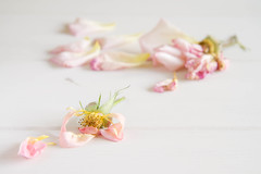 176/366: Divided we fall... (judi may) Tags: wood flowers roses stilllife petals soft dof bokeh pastel delicate dyingroses tabletopphotography canon7d day176366 366the2016edition 3662016 24jun16