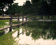 A Small Rain (PositiveAboutNegatives) Tags: film analog puddle florida rangefinder wideangle slidefilm jupiter12 zeissikon coolscan rainfall fujivelvia contaxii kievii kiev2a nikon9000scanner biogoncopy johnprincememorialpark rangefinderfilmphotography freefilmimages