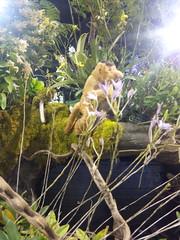 IMG_20160321_111613 (Sasha India) Tags: flowers orchid thailand orchids bangkok exibition apoc   apoc12
