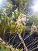 IMG_20160321_111613 (Sasha India) Tags: flowers orchid thailand orchids bangkok exibition apoc таиланд бангкок apoc12