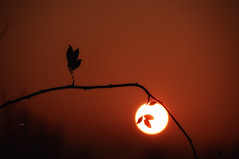 """The remains of the day..."" (Ilargia64) Tags: sunset sun nature silhouette serenity remainsoftheday warmcolors salburua nevertoolate amayasanchez"