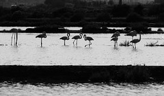 Nature (Helena Compadre) Tags: blackandwhite portugal water gua algarve riaformosa olho pretobranco helenacompadre canonpowershotsx510hs