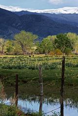 furst_160502_1987-Edit_LR_ (pillar point posters) Tags: california tree bodie sierras