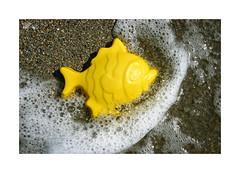 Playeando... (ngel mateo) Tags: espaa fish pez beach andaluca spain playa shore foam andalusia almera mediterraneansea orilla espuma marmediterrneo elejido yellowfish balerma pezamarillo ngelmartnmateo ngelmateo