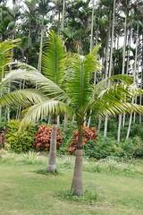 (lulun & kame) Tags: plant lumixg20f17