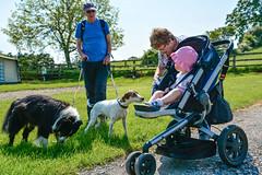 Meeting the Dogs! (Nikki & Tom) Tags: uk grandma liz dogs girl tom toddler child sophie jazz harris tynewear