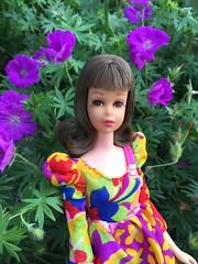 Francie in the Garden (Foxy Belle) Tags: francie doll mattel vintage barbie brunette flip flowers garden outside magenta pink mod dress multicolored geranium sanguineum new hampshire purple bloody cranesbill