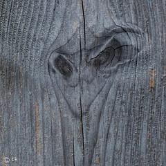 Autruche.jpg (BoCat31) Tags: visage