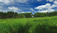 Sugarcamp Mountain (1) (Nicholas_T) Tags: trees summer sky nature field grass clouds pennsylvania meadow cumulus publicdomain endlessmountains freephoto freeimage loyalsockstateforest lycomingcounty cc0 sugarcampmountain sugarcampmountainroad