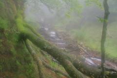 Parque natural de #Gorbeia #Orozko #DePaseoConLarri #Flickr -100 (Jose Asensio Larrinaga (Larri) Larri1276) Tags: 2016 parquenatural gorbeia naturaleza bizkaia orozko euskalherria basquecountry