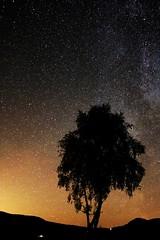 Stars and tree (Orry_2000) Tags: sky orange sun black tree sol night canon stars eos star view outdoor himmel 1855mm tre utsikt ombo natt orry svart oransje hjelmeland ryfylke stjerner natthimmel 750d