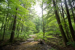 0V5A2423 (Connor Wyckoff) Tags: camping red river hiking kentucky backpacking gorge osprey