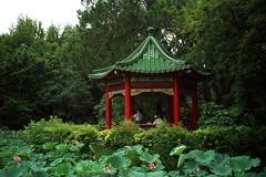 _6 (Taiwan's Riccardo) Tags: ltm color digital taiwan rangefinder botanicalgarden  l39  colorskopar 2016 28mmf35 sonyccd voigtlanderlens epsonrd1x