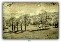 LE MONT DES CATS (rgisa) Tags: panorama cats tree arbre mont vue montdescats godewaersvelde