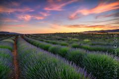 Provenza Murciana. (Carlos J. Teruel) Tags: sunset cloud landscape atardecer photography nikon murcia cielo nubes naturalbeauty nikon1835 campodesanjuan xaviersam carlosjteruel d800e nikonafsnikkor1835mmf3545ged