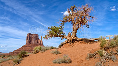 Tree and Mitten (Jerry Fornarotto) Tags: travel arizona sky panorama southwest west tree nature beautiful rock stone clouds landscape outdoors utah ut sand sandstone scenery butte view desert outdoor pano indian scenic az landmark scene tribal tourist panoramic nativeamerican western environment geology wilderness navajo monumentvalley viewpoint 169 arid mesa hopi reservation mitten buttes geological navajotribalpark utahlandscape sonya7r jerryfornarotto fe2470f4zaoss