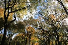 Central Park Promenade in the Fall