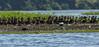 DSC01905 (Mario C Bucci) Tags: verde do eduardo garça tuiuiu dinan bigua banhado ratão anhambi tanquã tanquan