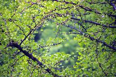 Summer Breeze (Génial N) Tags: tree green pentax korea seoul pentaxkr