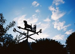 Home (long may she rain ) Tags: home 35mm garden terrier weathervane cairn cairnterrier olympusxa3