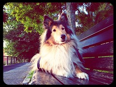 sitting on a bench at Balcone del Golfo (Sierra Nera) Tags: park street dog dogs nature field spring collie candy country sierra lassie falconaramarittima hermio
