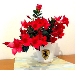 Flower pot Ferrari image (john bonham2) Tags: pink blue windows red roses summer orange flower floral beauty rose yellow garden square photography google origami colorful paint pretty acrylic hand purple orchids time random sweet drawing smooth fuchsia stamp hibiscus clay stuff vase colored plates geranium maiden potted holder watering lavendar