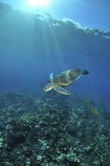 2012 07 METTRA OCEAN INDIEN 0170