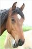 Paardenhoofd (5D053698) (Hetwie) Tags: paarden paardenhoofd