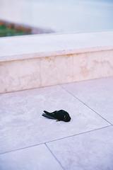 A Dead Bird (val vaynerman) Tags: pink sunset sea portrait girl yellow eva odessa ukraine blacksea kidsfashion koblevo