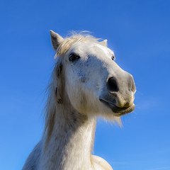 Caval Donato (::fede::) Tags: portrait horse france color nature animal cheval nikon natura francia cavallo camargue d3100