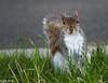 Squirrel (m_hamad) Tags: nature animal closeup canon dc squirrel wildlife picnik chipmunks sciuridae supershot 60d canon60d