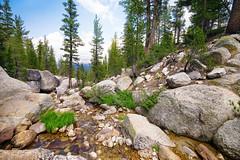 Down Stream to Tuolumne (ken mccown) Tags: california trees nature rocks yosemitenationalpark