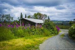 Fireweed of Homer | Alaska (Bo Ryan Photography) Tags: road house flower tree home yellow bush nikon purple explore vacant nikkor boryan fireweed