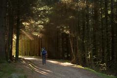 Loch Lomond hike (Strength) Tags: autumn camp woodland scotland october hike trail loch lochlomond westhighlandway flickrandroidapp:filter=none