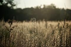 Trava / Grass