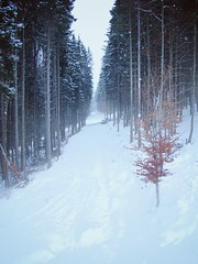 (Alena Y) Tags: winter snow nature magic carpathians