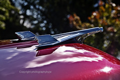 1955 Chevrolet Hood Emblem (Photographybyjw) Tags: old light red sun classic chevrolet 1955 beautiful beauty vintage reflections emblem fun found this interesting shadows ride north sharp chrome carolina restored hood gleaming photographybyjw