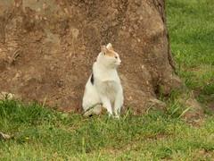 P4030024 (Maurizio Masini) Tags: felini gatto gatti gattidiroma
