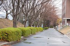 Rainy day (bubykung) Tags: street tree beautiful rain japan landscape university cloudy fresh rainy osaka 18200 d90 suita
