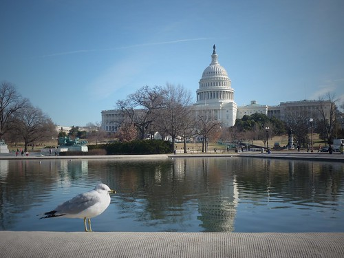 The reflecting pool & the Capitol, Washington DC, USA