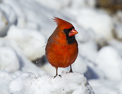 birds (irina_escoffery) Tags: nature birds