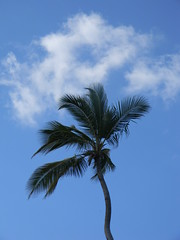 Blue, white and green (kjimbo (Wishes for Peace)) Tags: resort punta cana nwn breathless
